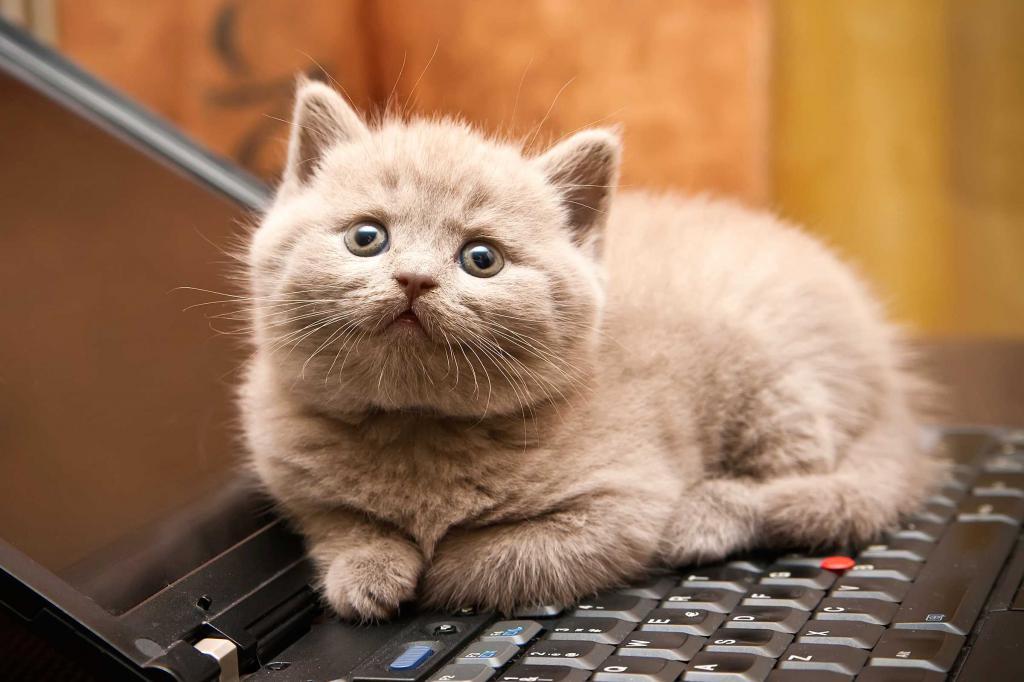 как человека видит кошка
