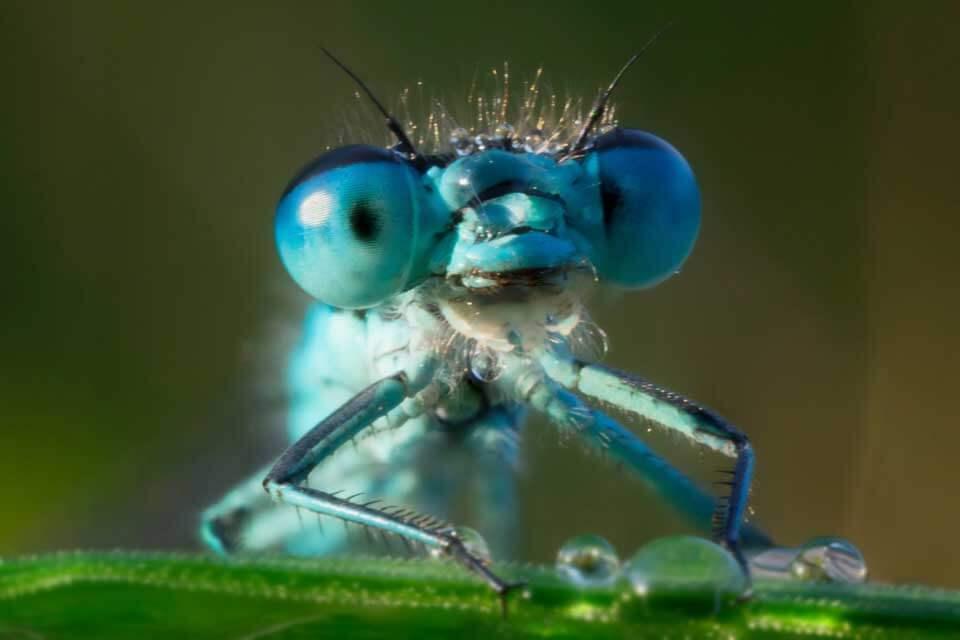 Забавное насекомое